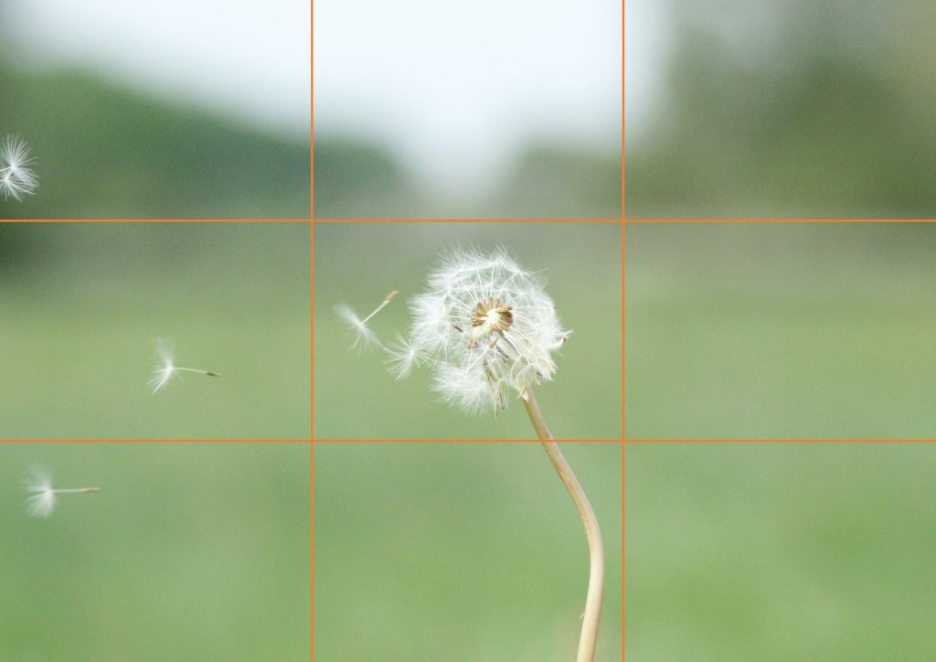 Bad example of rule of thirds showing a dandelion on the centre