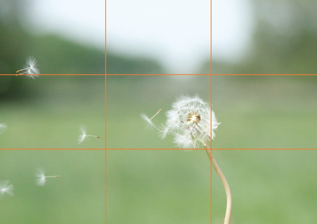 Good example of rule of thirds showing a dandelion to the right