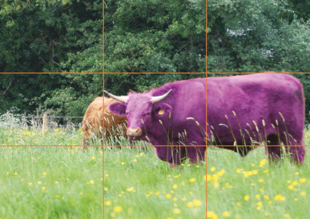 Good example showing the purple cow to the right