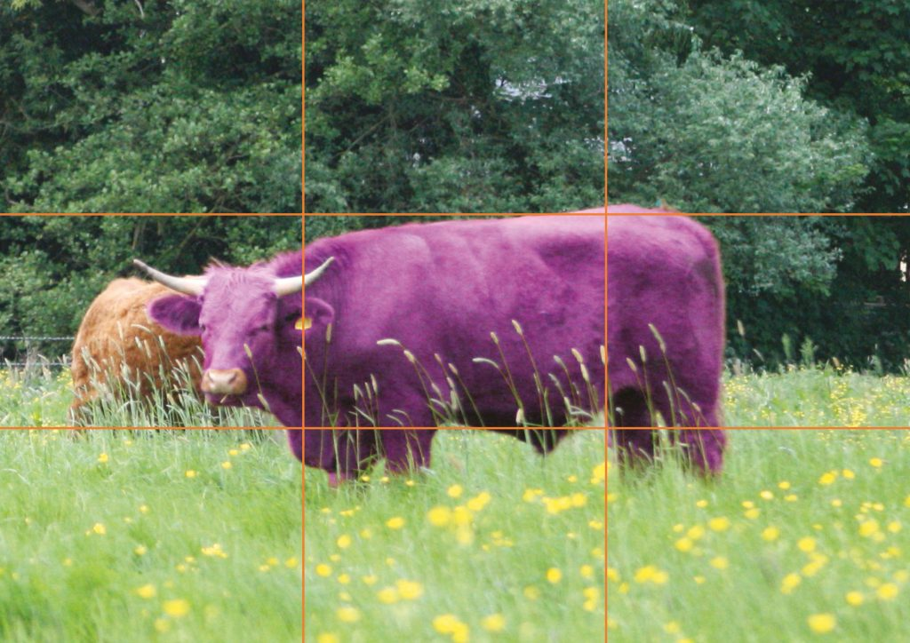 Bad example showing the purple cow in the centre