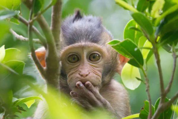 Monkey spotlight on The World Land Trust